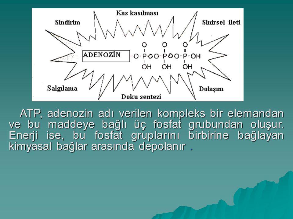 Enerji Sistemleri Fiziksel aktiviteler için 3 metabolik sistem önemlidir.  Fosfojen  Glikojen-laktik asit  Aerobik sistem