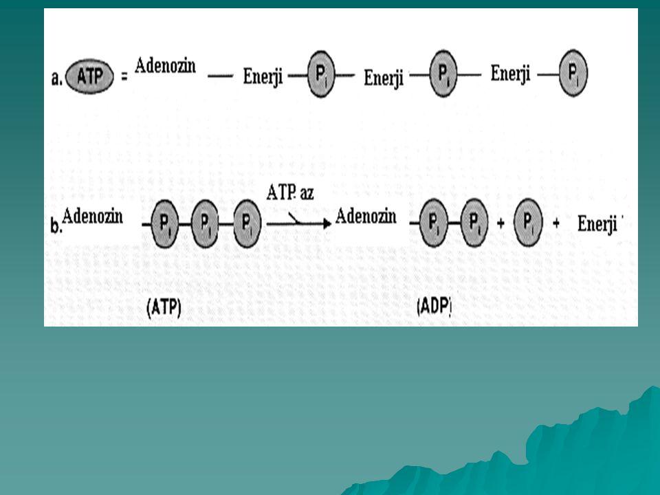 ATP, adenozin adı verilen kompleks bir elemandan ve bu maddeye bağlı üç fosfat grubundan oluşur. Enerji ise, bu fosfat gruplarını birbirine bağlayan k