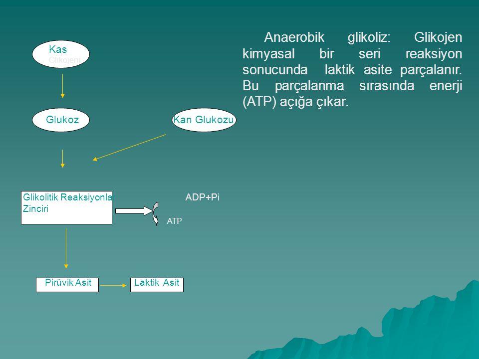 ATP-CP veya Fosfojen Sistemi a. Kreatin yüksek enerji bağı P b. CP   Kreatin + Pi + Enerji Enerji + ADP + Pi   ATP Enerji + ADP + Pi   ATP