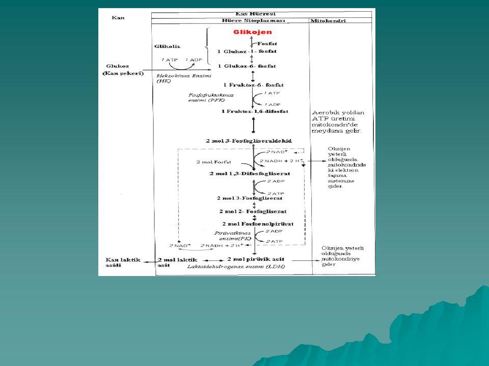 Anaerobik Glikoliziz sonucu  Laktik asit oluşur  Sadece CHO enerji kaynağı olarak kullanılır  O 2 kullanılmaz  Yalnızca birkaç mol ATP üretilir (2-3 mol) C 6 H 12 O 6 2C 3 H 6 O 3 + Enerji (Glukoz) ( Laktik asit ) ENERJİ + 3 ADP + 3 Pi 3 ATP