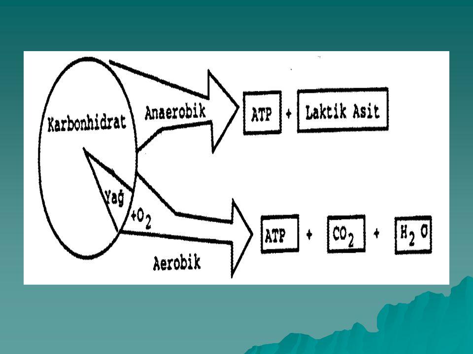 Kısa süreli Egzersizde Enerji Metabolizması  Aerobik yolla, egzersiz sırasında yeterli miktarda ATP sağlayamamasının nedenleri; 1.Herkesin aerobik ka
