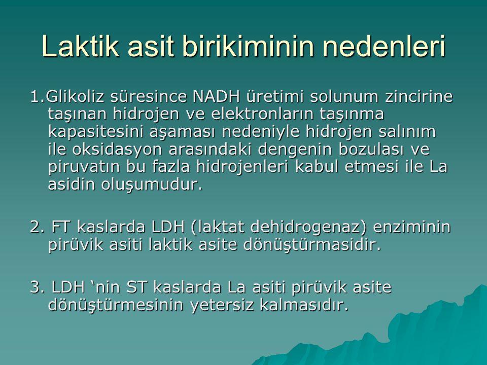 Kısa süreli Egzersizde Enerji Metabolizması  A) Acil enerji sistemi  B) La asit sistemi