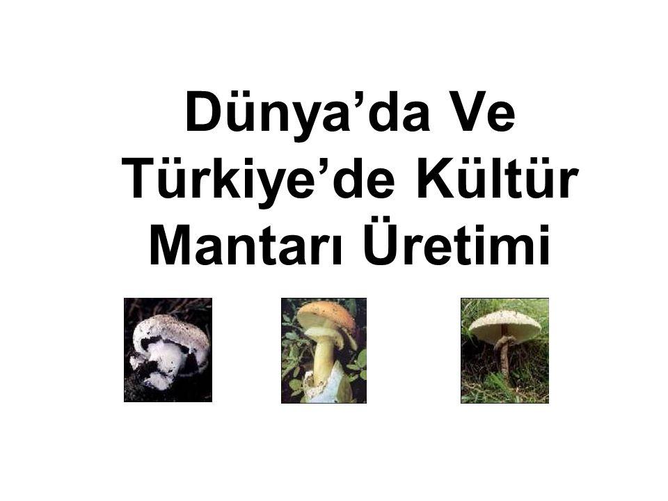 Dünya'da Ve Türkiye'de Kültür Mantarı Üretimi