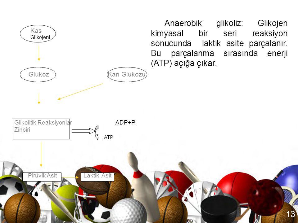 12 ATP-CP veya Fosfojen Sistemi a. Kreatin yüksek enerji bağı P b. CP   Kreatin + Pi + Enerji Enerji + ADP + Pi   ATP Enerji + ADP + Pi   ATP