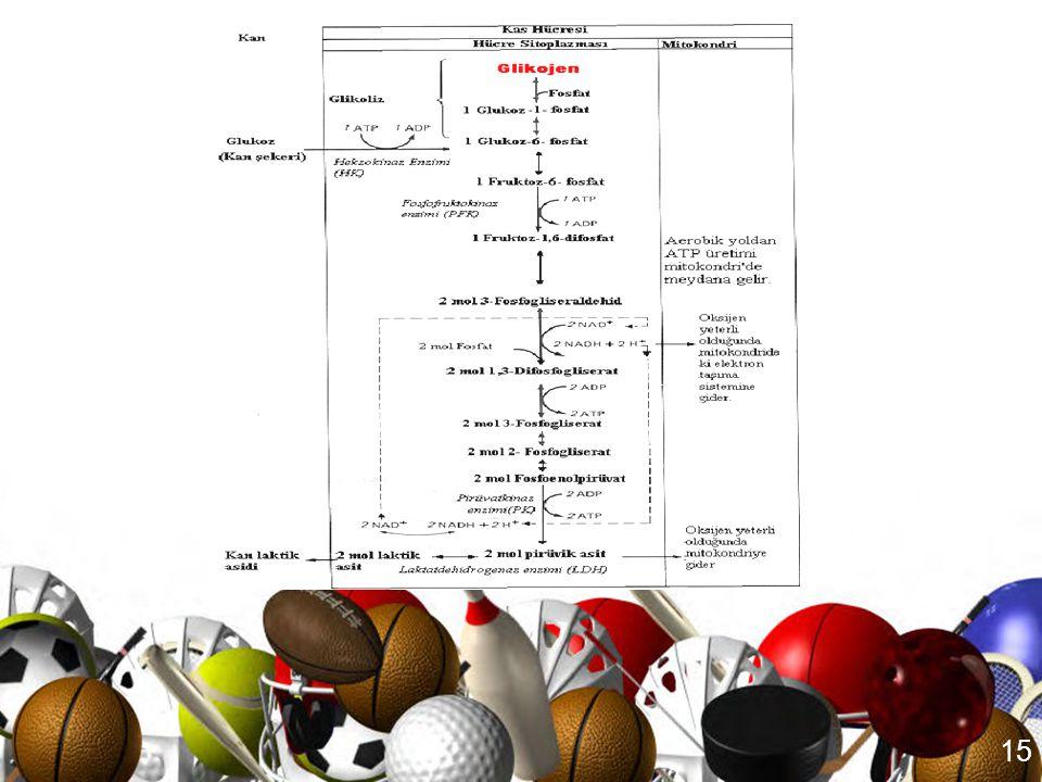 14 Anaerobik Glikoliziz sonucu •Laktik asit oluşur •Sadece CHO enerji kaynağı olarak kullanılır •O 2 kullanılmaz •Yalnızca birkaç mol ATP üretilir (2-