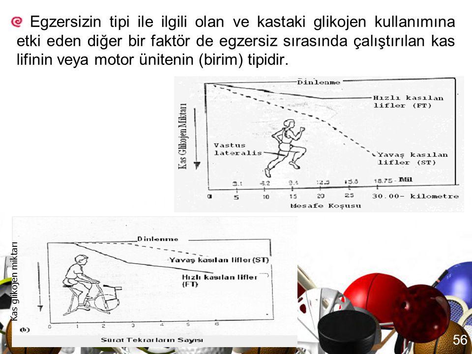 55 Egzersizin tipi de (örn; koşu, yüzme ve pedal çevirme) kaslarda kullanılan glikojen miktarını etkileyebilir.