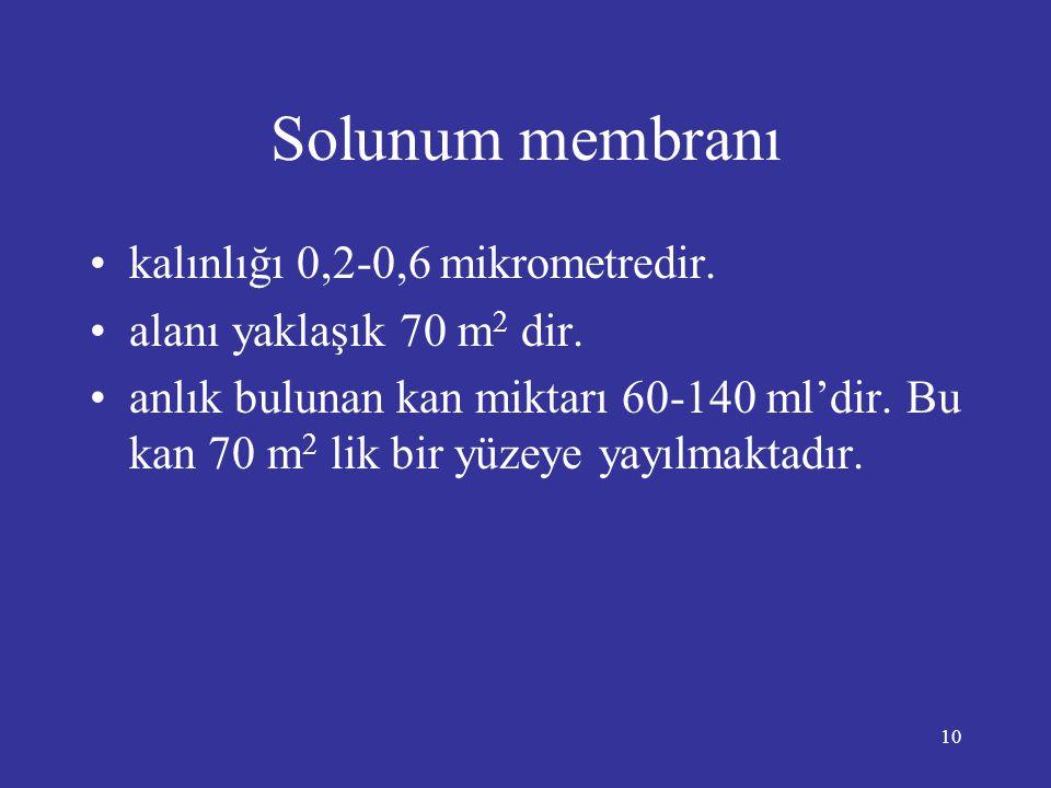 10 Solunum membranı •kalınlığı 0,2-0,6 mikrometredir. •alanı yaklaşık 70 m 2 dir. •anlık bulunan kan miktarı 60-140 ml'dir. Bu kan 70 m 2 lik bir yüze