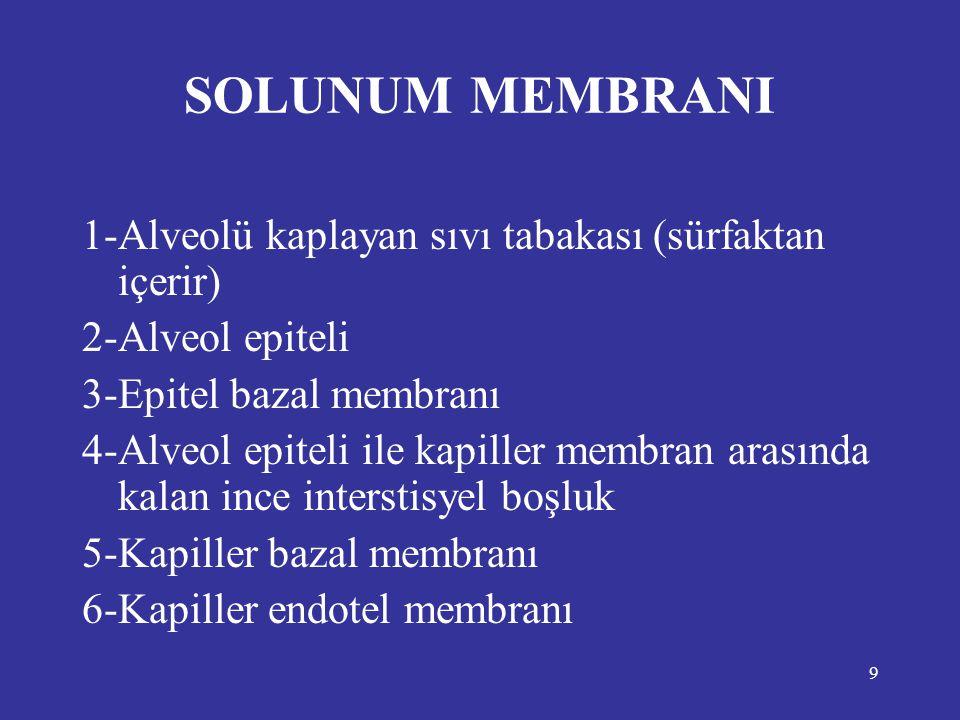 9 SOLUNUM MEMBRANI 1-Alveolü kaplayan sıvı tabakası (sürfaktan içerir) 2-Alveol epiteli 3-Epitel bazal membranı 4-Alveol epiteli ile kapiller membran
