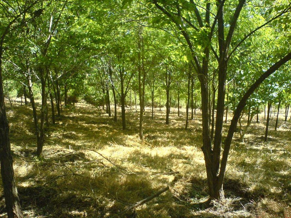 21 Sonuç  Bir nilüfer gölünde tek bir nilüfer yaprağı vardır ve her gün yaprak sayısı iki katına çıkmaktadır.