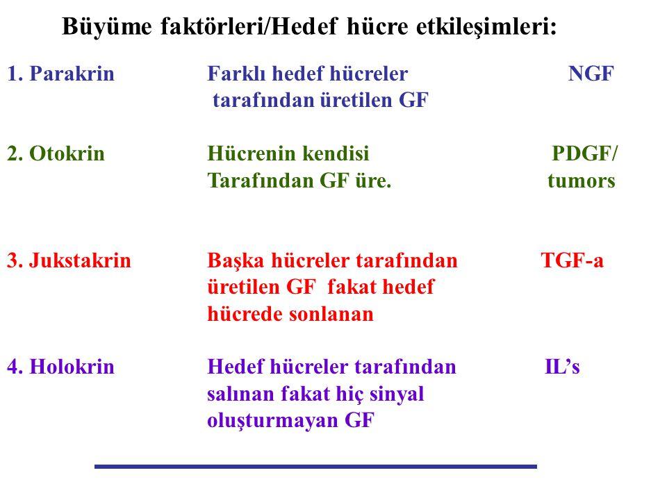Büyüme faktörleri/Hedef hücre etkileşimleri: 1. ParakrinFarklı hedef hücreler NGF tarafından üretilen GF 2. OtokrinHücrenin kendisi PDGF/ Tarafından G
