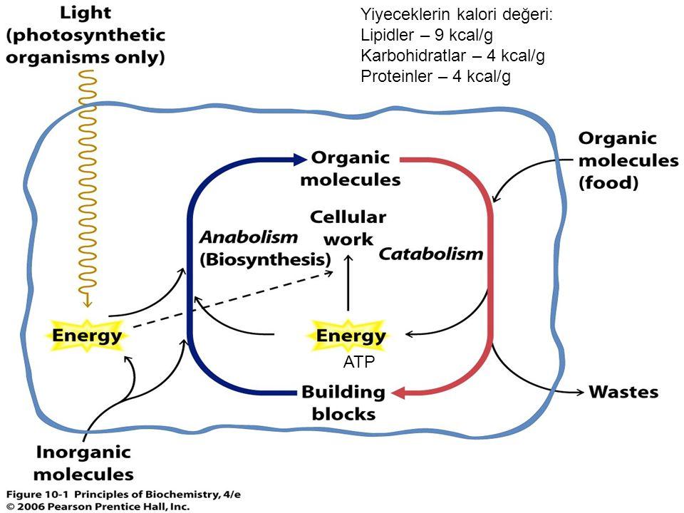 Yiyeceklerin kalori değeri: Lipidler – 9 kcal/g Karbohidratlar – 4 kcal/g Proteinler – 4 kcal/g ATP