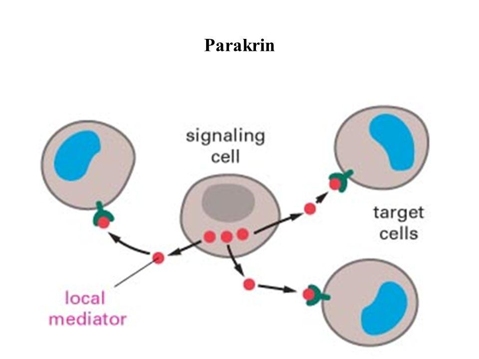 Parakrin