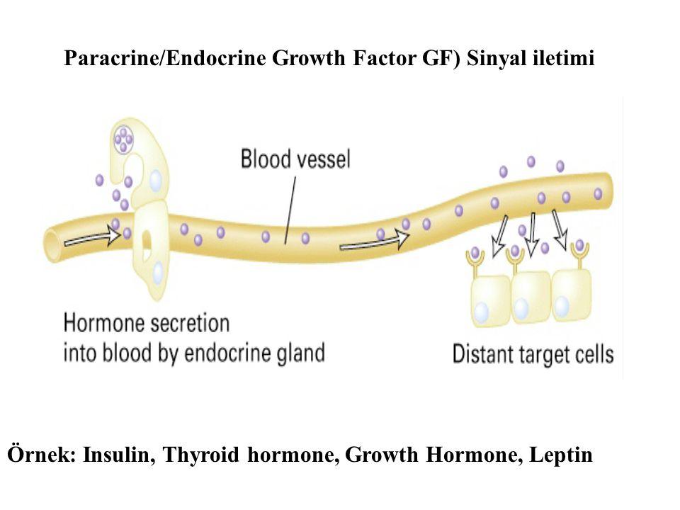 Paracrine/Endocrine Growth Factor GF) Sinyal iletimi Örnek: Insulin, Thyroid hormone, Growth Hormone, Leptin
