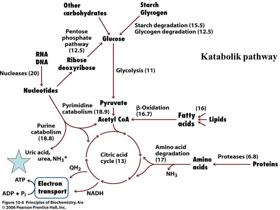 Hedef hücre reseptörleri: