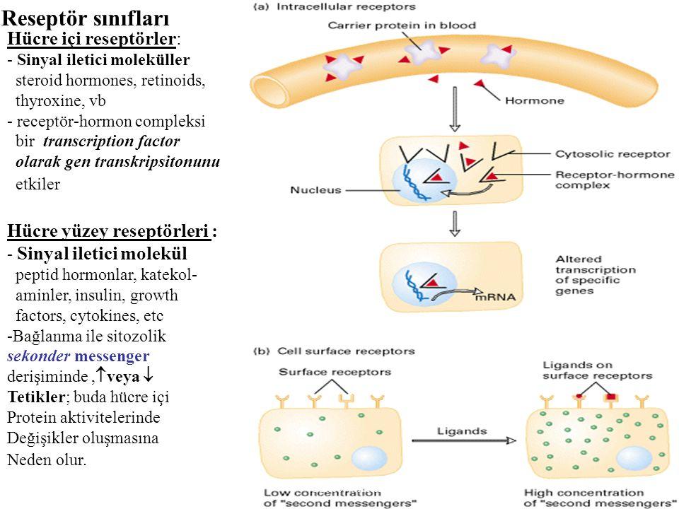 Hücre içi reseptörler: - Sinyal iletici moleküller steroid hormones, retinoids, thyroxine, vb - receptör-hormon compleksi bir transcription factor ola