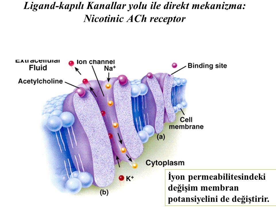 Ligand-kapılı Kanallar yolu ile direkt mekanizma: Nicotinic ACh receptor İyon permeabilitesindeki değişim membran potansiyelini de değiştirir.