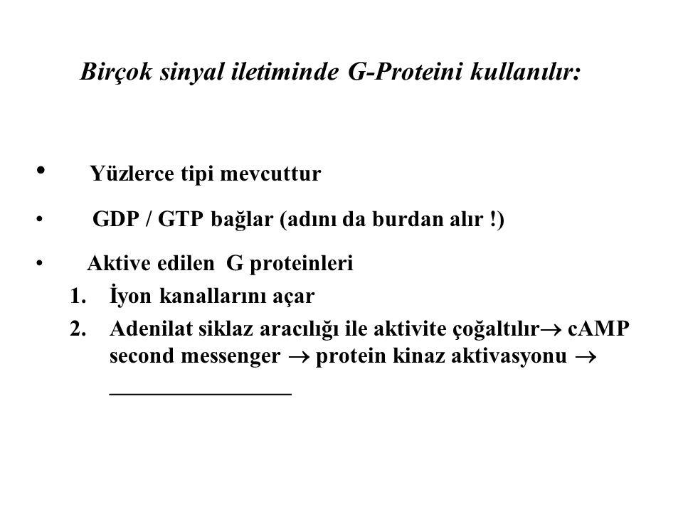 Birçok sinyal iletiminde G-Proteini kullanılır: • Yüzlerce tipi mevcuttur • GDP / GTP bağlar (adını da burdan alır !) • Aktive edilen G proteinleri 1.