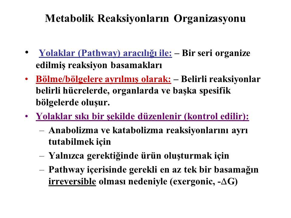 Pathway Tipleri: •Bireysel reaksiyon serileri: –A) Lineer, Dallı –B) Siklik (Dairesel, döngüsel) –C) Spiral •Birleşik pathwayler: –Bir noktaya yöneltilen (metabolik) –Birbirinden uzaklaşan