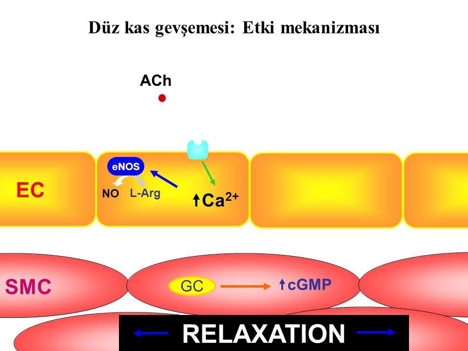 Düz kas gevşemesi: Etki mekanizması EC SMC ACh  Ca 2+ eNOS NO L-Arg GC  cGMP RELAXATION