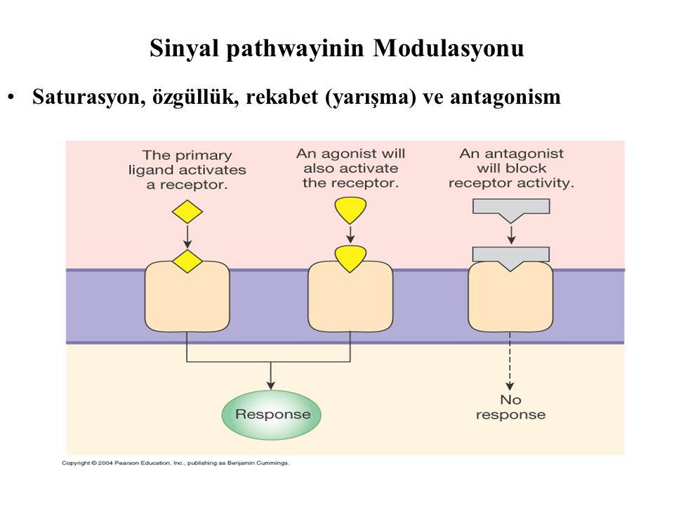 Sinyal pathwayinin Modulasyonu •Saturasyon, özgüllük, rekabet (yarışma) ve antagonism