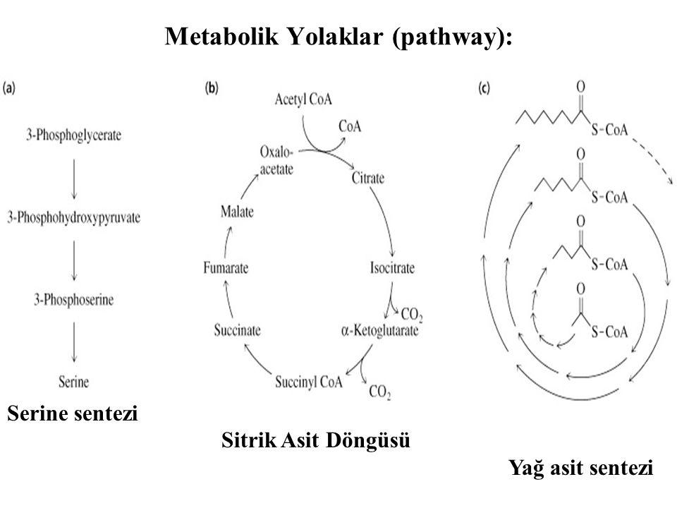 Metabolik Yolaklar (pathway): Serine sentezi Sitrik Asit Döngüsü Yağ asit sentezi