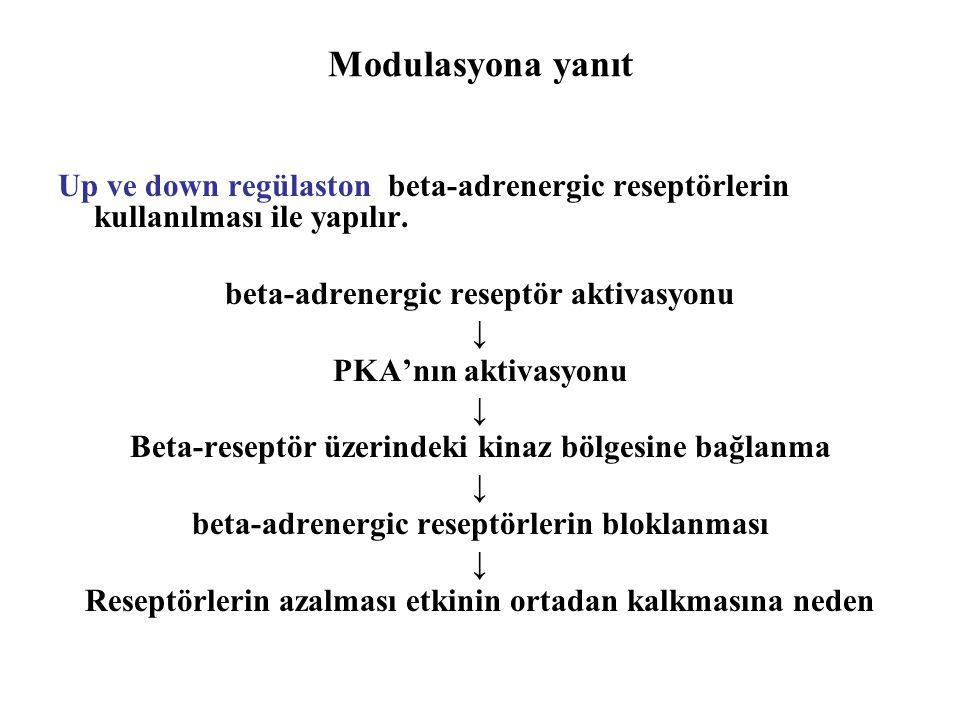 Modulasyona yanıt Up ve down regülaston beta-adrenergic reseptörlerin kullanılması ile yapılır. beta-adrenergic reseptör aktivasyonu ↓ PKA'nın aktivas