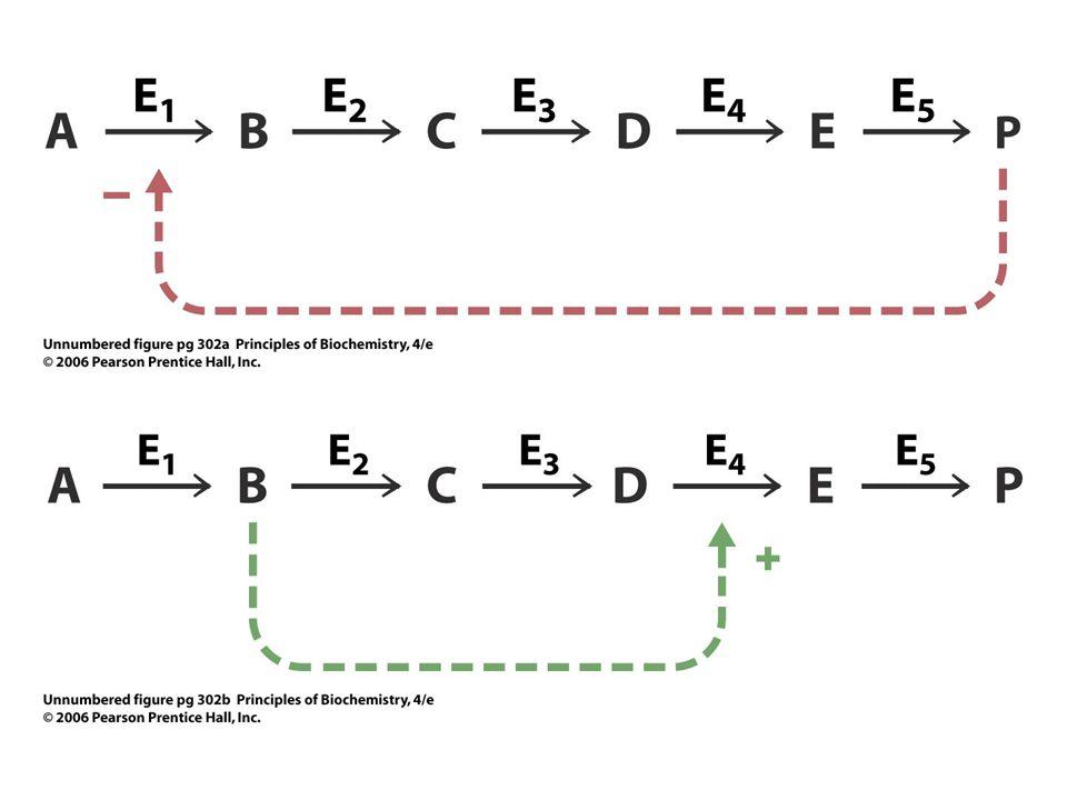 Sinyal pathwayinin Modulasyonu •Özgüllük ve Rekabet: •Ligandlar ve reseptörler arasındaki affinite farklılıkları • Tek bir reseptör için çoklu ligand –Benzer yapıdaki farklı moleküllerin aynı reseptöre bağlanabilmesi