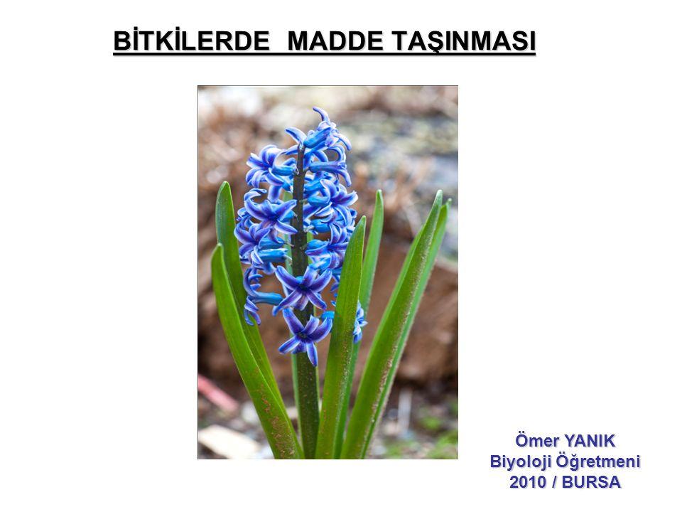 BİTKİLERDE MADDE TAŞINMASI Ömer YANIK Biyoloji Öğretmeni 2010 / BURSA