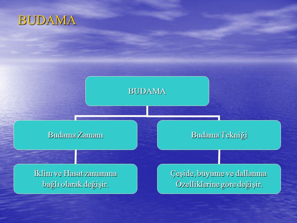 BUDAMABUDAMA Budama Zamanı İklim ve Hasat zamanına bağlı olarak değişir. Budama Tekniği Çeşide, büyüme ve dallanma Özelliklerine göre değişir.