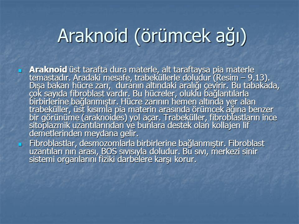 Araknoid (örümcek ağı) Araknoid (örümcek ağı)  Araknoid üst tarafta dura materle, alt taraftaysa pia materle temastadır. Aradaki mesafe, trabeküllerl