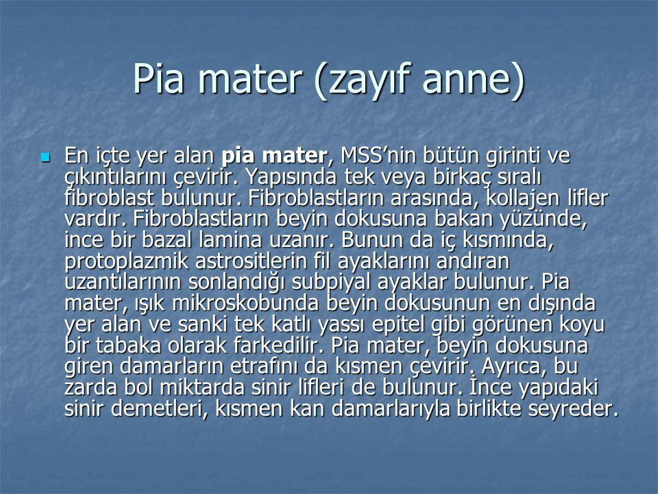 Pia mater (zayıf anne)  En içte yer alan pia mater, MSS'nin bütün girinti ve çıkıntılarını çevirir. Yapısında tek veya birkaç sıralı fibroblast bulun