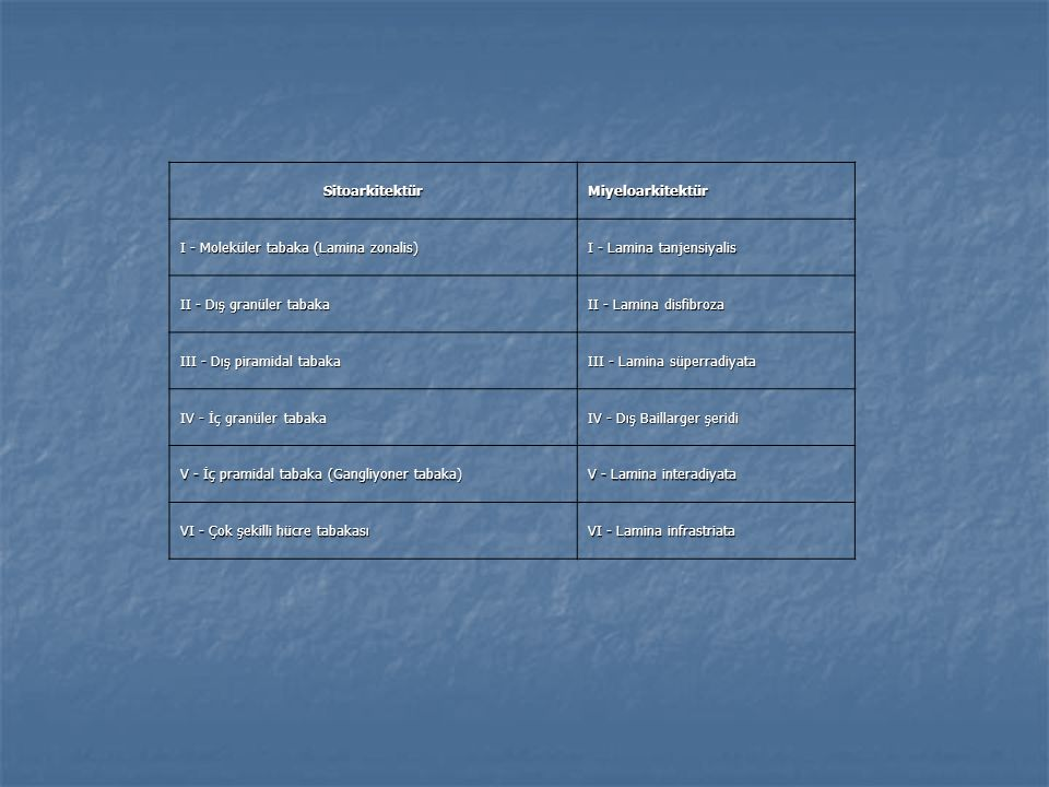 SitoarkitektürMiyeloarkitektür I - Moleküler tabaka (Lamina zonalis) I - Lamina tanjensiyalis II - Dış granüler tabaka II - Lamina disfibroza III - Dı
