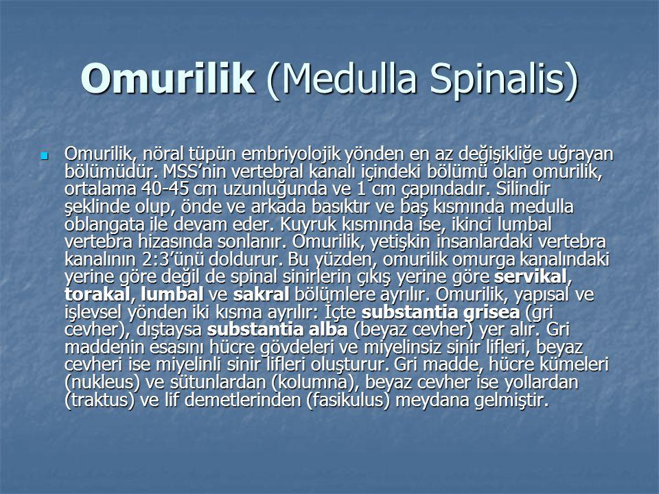 Omurilik (Medulla Spinalis)  Omurilik, nöral tüpün embriyolojik yönden en az değişikliğe uğrayan bölümüdür. MSS'nin vertebral kanalı içindeki bölümü