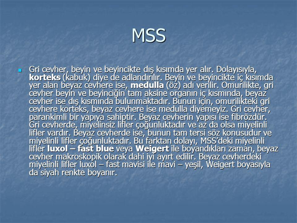 MSS  Gri cevher, beyin ve beyincikte dış kısımda yer alır. Dolayısıyla, korteks (kabuk) diye de adlandırılır. Beyin ve beyincikte iç kısımda yer alan