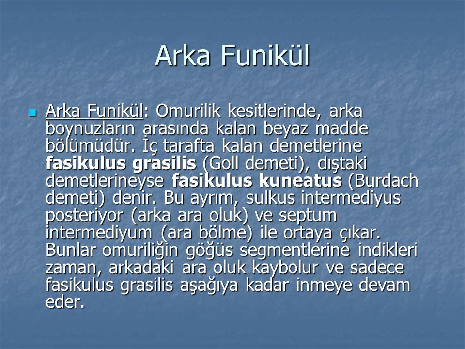 Arka Funikül  Arka Funikül: Omurilik kesitlerinde, arka boynuzların arasında kalan beyaz madde bölümüdür. İç tarafta kalan demetlerine fasikulus gras