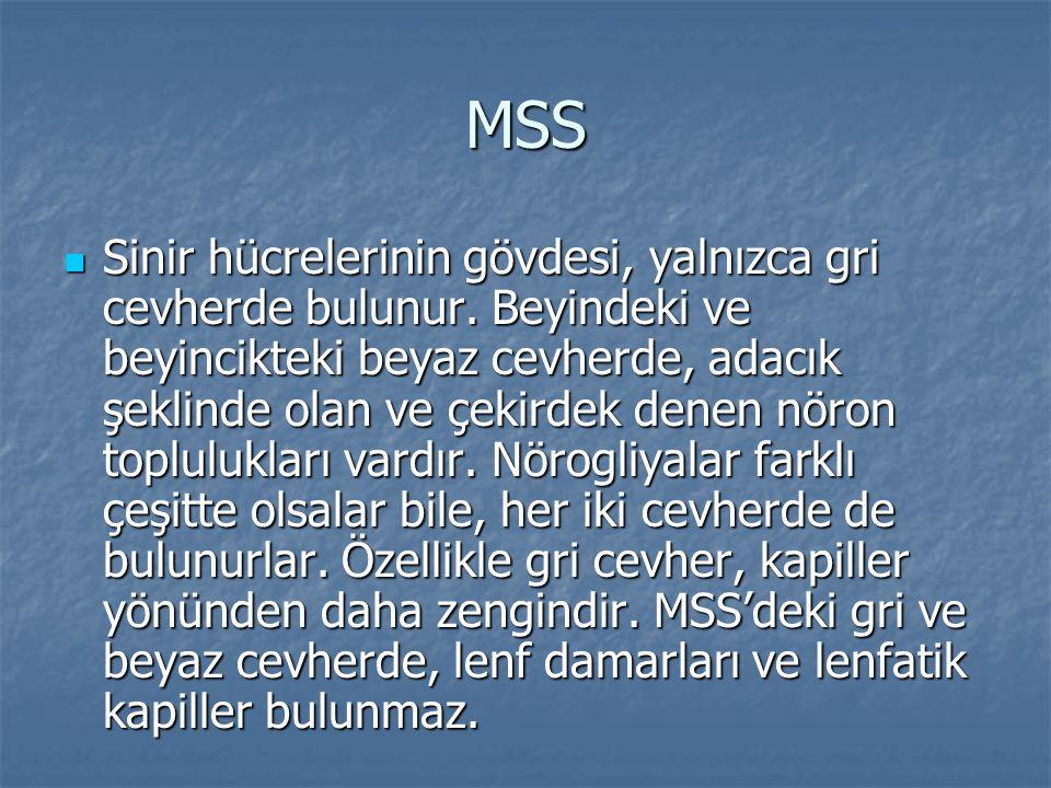 MSS  Sinir hücrelerinin gövdesi, yalnızca gri cevherde bulunur. Beyindeki ve beyincikteki beyaz cevherde, adacık şeklinde olan ve çekirdek denen nöro