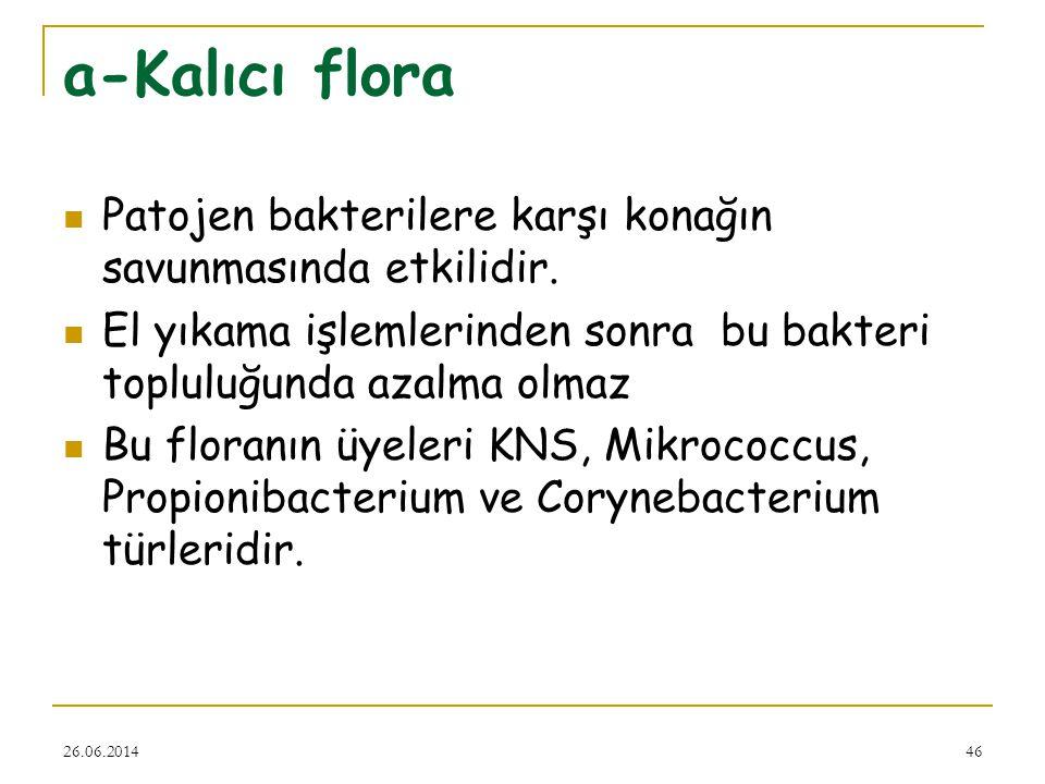26.06.201446 a-Kalıcı flora  Patojen bakterilere karşı konağın savunmasında etkilidir.  El yıkama işlemlerinden sonra bu bakteri topluluğunda azalma
