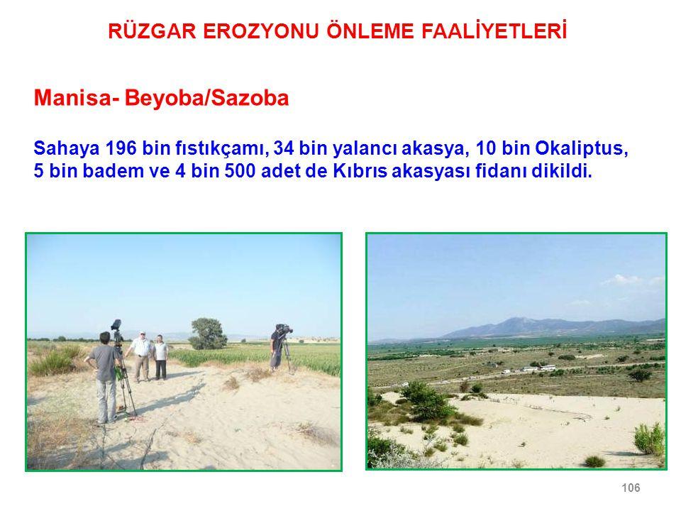 106 Manisa- Beyoba/Sazoba Sahaya 196 bin fıstıkçamı, 34 bin yalancı akasya, 10 bin Okaliptus, 5 bin badem ve 4 bin 500 adet de Kıbrıs akasyası fidanı