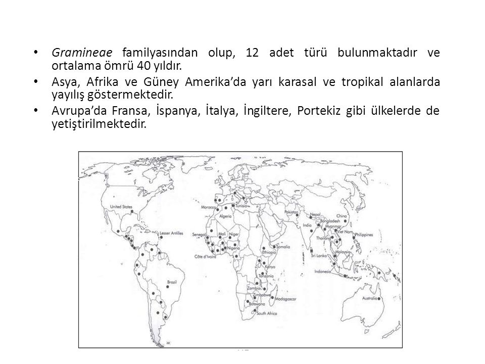 112 • Gramineae familyasından olup, 12 adet türü bulunmaktadır ve ortalama ömrü 40 yıldır. • Asya, Afrika ve Güney Amerika'da yarı karasal ve tropikal