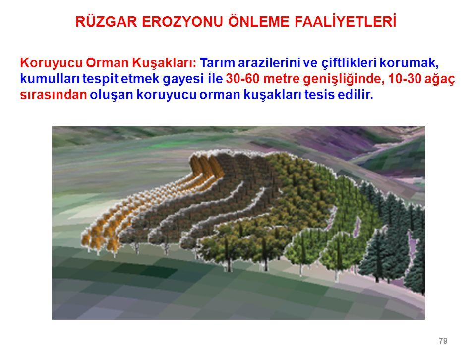 79 Koruyucu Orman Kuşakları: Tarım arazilerini ve çiftlikleri korumak, kumulları tespit etmek gayesi ile 30-60 metre genişliğinde, 10-30 ağaç sırasınd