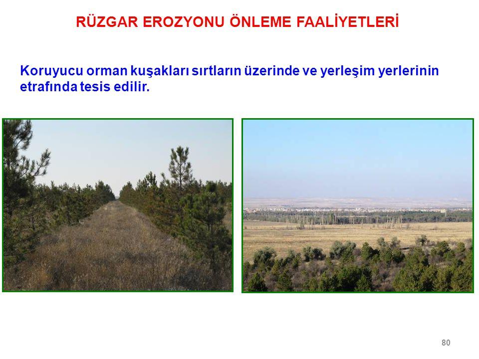 80 Koruyucu orman kuşakları sırtların üzerinde ve yerleşim yerlerinin etrafında tesis edilir. RÜZGAR EROZYONU ÖNLEME FAALİYETLERİ