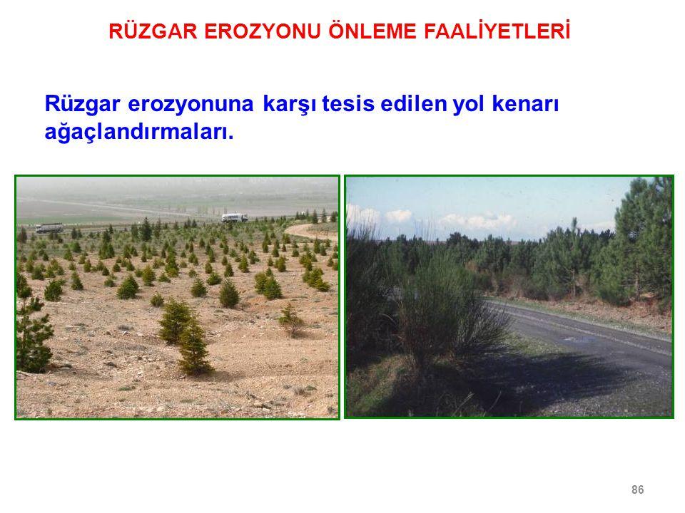 86 Rüzgar erozyonuna karşı tesis edilen yol kenarı ağaçlandırmaları.