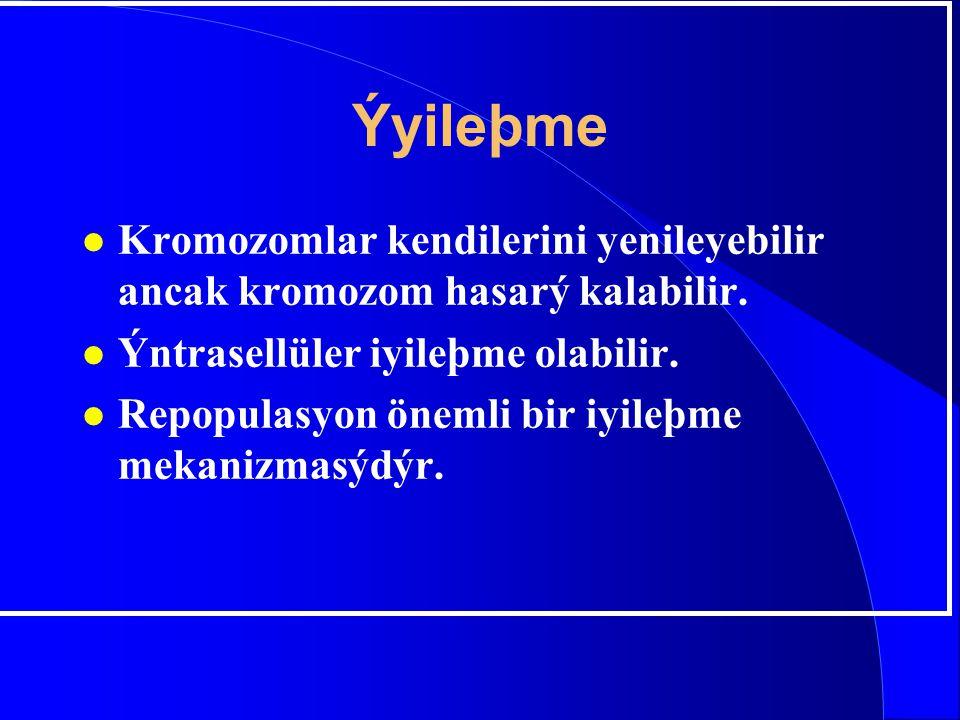 Ýyileþme l Kromozomlar kendilerini yenileyebilir ancak kromozom hasarý kalabilir. l Ýntrasellüler iyileþme olabilir. l Repopulasyon önemli bir iyileþm
