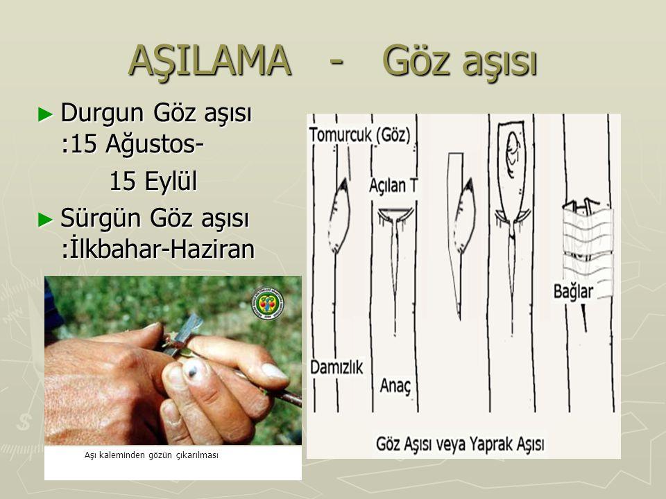 AŞILAMA - Göz aşısı ► Durgun Göz aşısı :15 Ağustos- 15 Eylül 15 Eylül ► Sürgün Göz aşısı :İlkbahar-Haziran Aşı kaleminden gözün çıkarılması