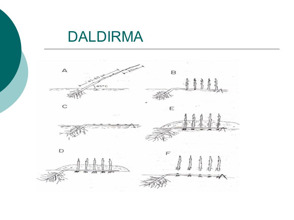 DALDIRMA