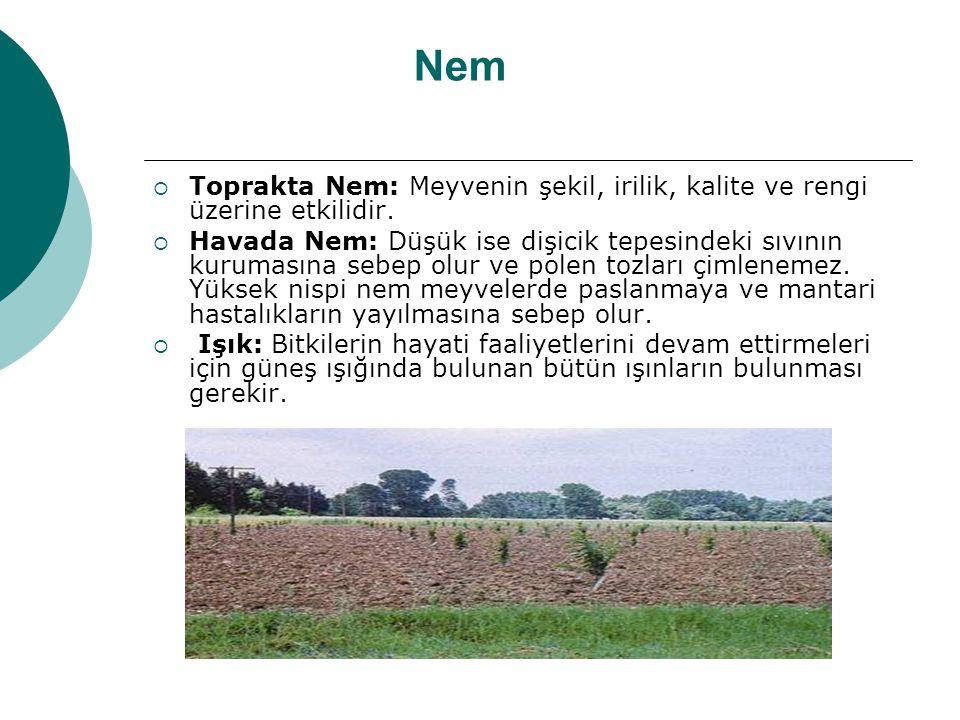 Nem  Toprakta Nem: Meyvenin şekil, irilik, kalite ve rengi üzerine etkilidir.  Havada Nem: Düşük ise dişicik tepesindeki sıvının kurumasına sebep ol