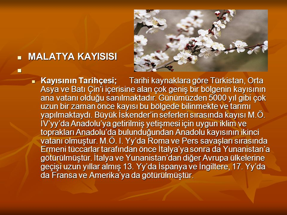  MALATYA KAYISISI    Kayısının Tarihçesi; Tarihi kaynaklara göre Türkistan, Orta Asya ve Batı Çin'i içerisine alan çok geniş bir bölgenin kayısının ana vatanı olduğu sanılmaktadır.