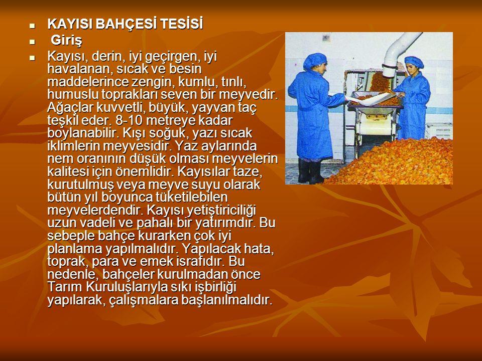  Malatya'da En Çok Yetiştirilen Bazı Kayısı Çeşitleri ve Özellikleri  Malatya'da üretilen kayısı çeşitlerinin başında Hacıhaliloğlu çeşidi gelir.