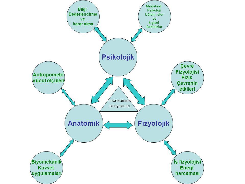 AnatomikFizyolojik Psikolojik ERGONOMİNİN BİLEŞENLERİ Antropometri Vücut ölçüleri Biyomekanik Kuvvet uygulamaları Çevre Fizyolojisi Fizik Çevrenin etk