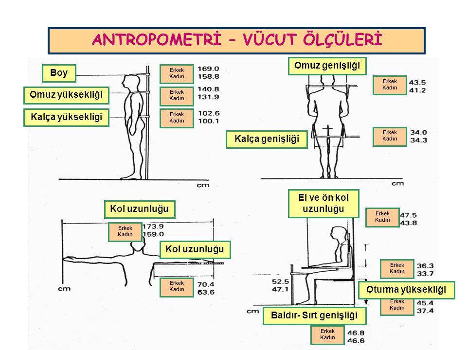 ANTROPOMETRİ – VÜCUT ÖLÇÜLERİ Boy Omuz yüksekliği Kalça yüksekliği Omuz genişliği Kalça genişliği Erkek Kadın Erkek Kadın Erkek Kadın Erkek Kadın Erke